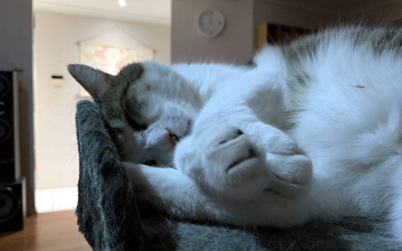 Even cats hate Mondays!