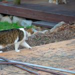Naavi The Cat Goes On Patrol